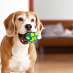4 Types of Pet Toys That You Need Right Now